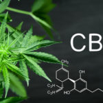 Medicinal Cannabis: ANVISA Opens Public Consultation